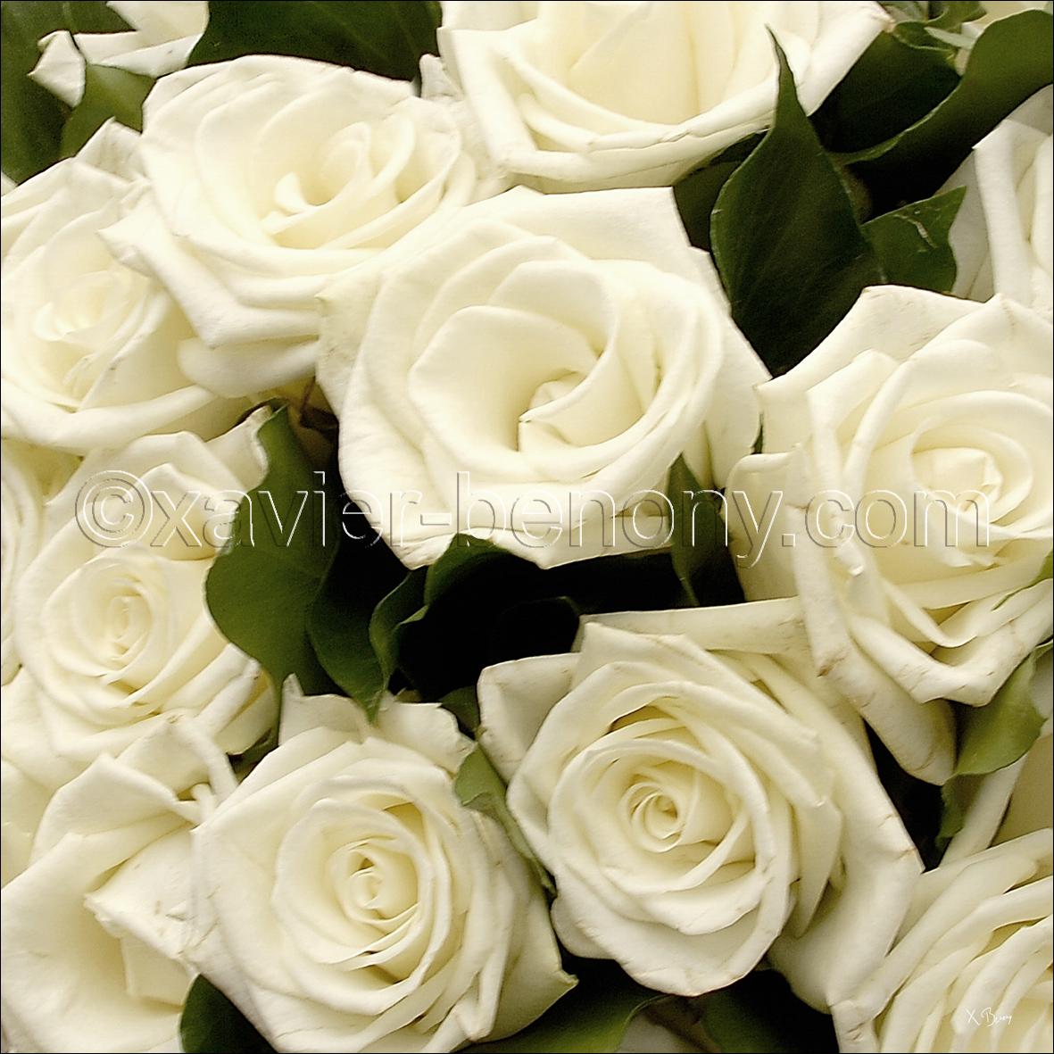 Un teint parfait le blog de no mie for Bouquet de roses blanches